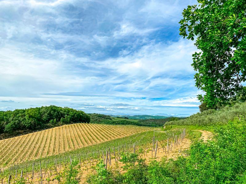 Monteriggioni la vista sulle dolci colline toscane dalla via Francigena