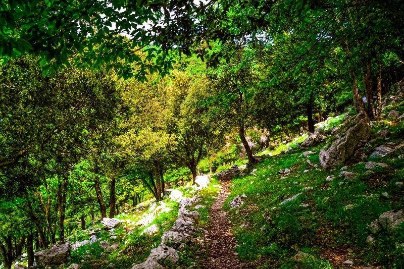 Eremo di Sant'Erasmo il sentiero nel bosco sui Monti Lepini