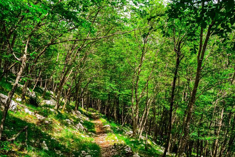 Eremo di Sant'Erasmo il sentiero ombreggiato nei Monti Lepini verso il balcone